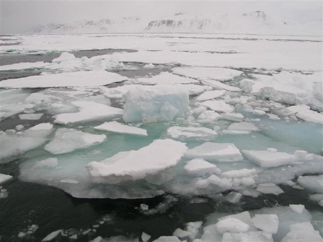 Vi sejlede ikke i is, hvis vi kunne undgå det. Så hellere vende om. Der er adskillige billeder af isfrit vand, men her er lidt is i en eller anden fjord. De tykkeste skosser var 1½ meter. Vi sejlede dog kun på én maskine. Den anden var forbeholdt en eventuelt fastsejling eller en indfangning i drivis. Det var lige ved at ske engang, men vi kunne ikke sejle, før den sidste gummibåd var ankommet, og det kunne den ikke for drivis.