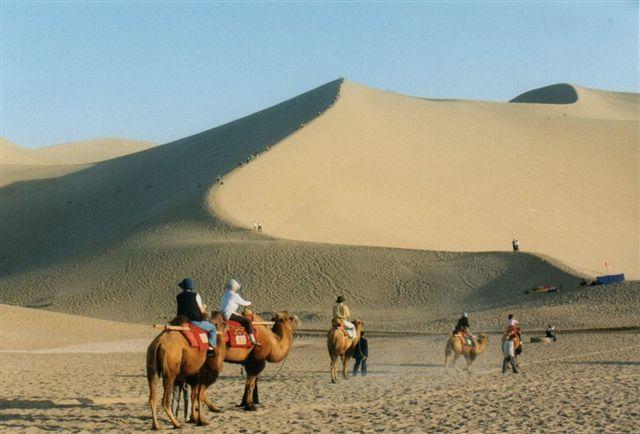 De syngende Bjerge i Dunhuang. Klitterne skulle være 150 meter høje. Så længe sandskornene var skarpkantede gav de en lyd fra sig, når vinden bevægede dem. Deraf det romantiske navn. Det lykkedes mig at bestige klitten i 1999. På vejen var der små spor, og ved at følge dem, fandt jeg et lille ørkenfirben! Kamelerne er turistkameler. Her er de topuklede, men pressen er i dag lige glade; de kalder også dromedarerne - de varmekrævende med kun én pukkel - for kameler.