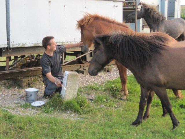 Hva' laver du? synes hestene at sørge. Gå nu lige væk! siger Steffen. Bemærk også hesten, der afsøger værkstedsvognen for spiseligt.