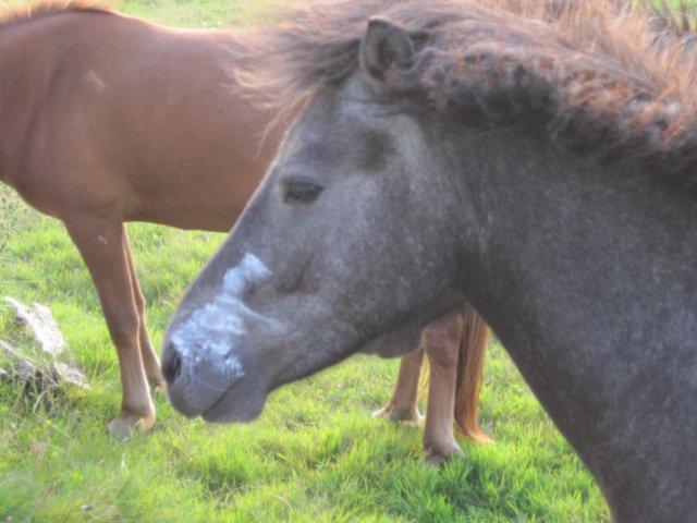 Hest med sminke? Det er ikke Steffen, der har malet kræet. Den gned selv farven af på kilometerstenen.