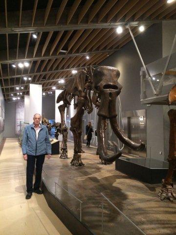 Son skrevet, så jeg ikke mammutten i St. Petersborg, og jeg ikke komme til mammutten, må mammutten komme til mig. Det gjorde den så i 2014, idet den med familie opholdt sig godt et halvt år på Zoologisk Museum i København. Her ses et af de største eksemplarer.