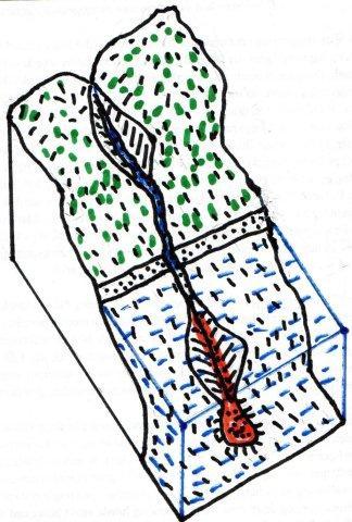 Ackeren i dag er markeret med rødt. Blåt er hav. Grønt er land, henholdsvis højland og lavland. En flod løber gennem en kløft fra bjergene ned i lavlandet, over stranden og ud i havet. Strømmen er stærk , så den graven endnu en kløft over havbunden ud over kontinentalsoklen til dybhavet. I gennem kløften transporteredes kvartssand, som i dag er forstenet og hævet så det nu ligger tilbage som en bjergryg af quarzit. Hele området er senere hævet op over havets overflade, men kløftens sider og omgivelser er gennem årmillionerne eroderet væk. Kun quarzitten ligger tilbage.