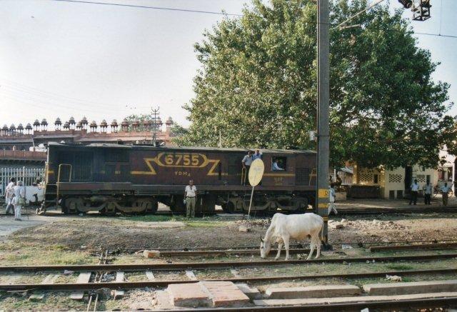 YDM 4 6755 på Agra Fort Station sammen med hellig ko.