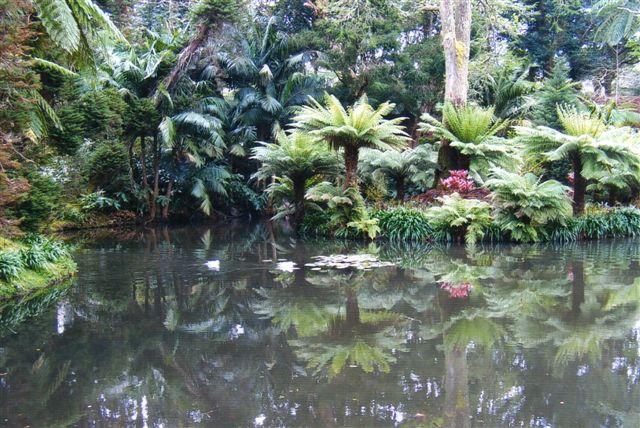 I den botaniske have lå en lille ø til fuglene. Her boede flere andefamilier, et svanepar og et gåsepar. Det var meget morsomt, for når svanen forlod reden for at svømme lidt rundt, gik gåsen omgående op og lagde sig på reden! Jeg sad med en følelse af paradis på jord, hvor alt åndede fred. Efterhånden lærte koihfiskene os også at kende, for de kom, hver gange vi satte os.