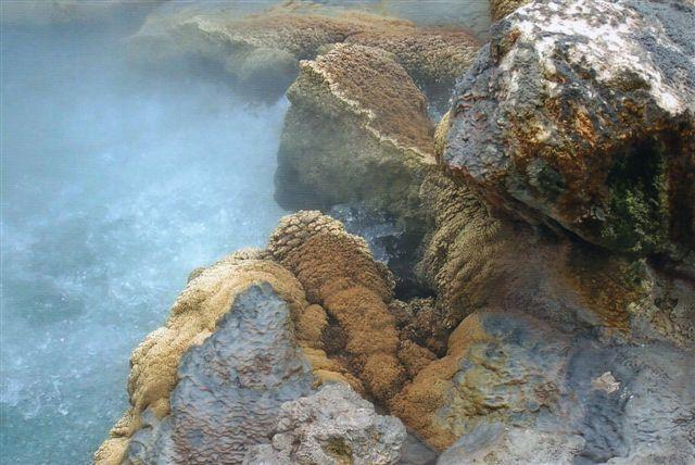Mineraler udskilt af det kogende vand. Der er kisel og kalk, men der er også et brunt overtræk. Det er bakterier. Der er organismer, der kan leve i op til 130 grader varmt vand.