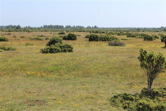 Navnlig Sydölands indre var præget af den højtliggende kalk. Naturen her var fælleder med græs og buske, men ikke meget skov. Det var der ikke muld nok til.