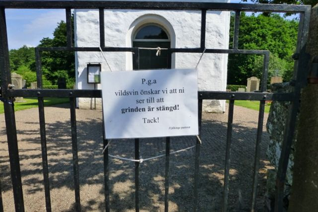 På Ivö frabad man sig vildsvin i hvert fald på kirkegården. 04.07.2013.