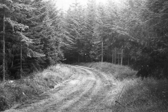 Gennem Lovrup Skov sås denne trache, som indfødte var sikre på havde båret militærbanen i sin tid. På denne tur deltog jeg ikke. Foto: SAG 1973.