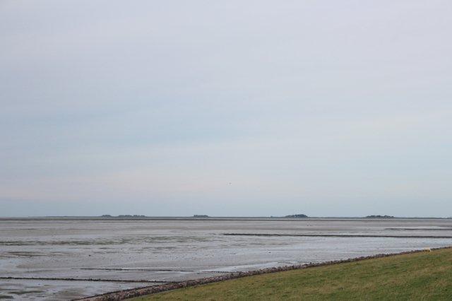 Fra Pellworm ses Hallig Hooge i baggrunden med værfter og omgivende græsland. Billedet er fra 2013.