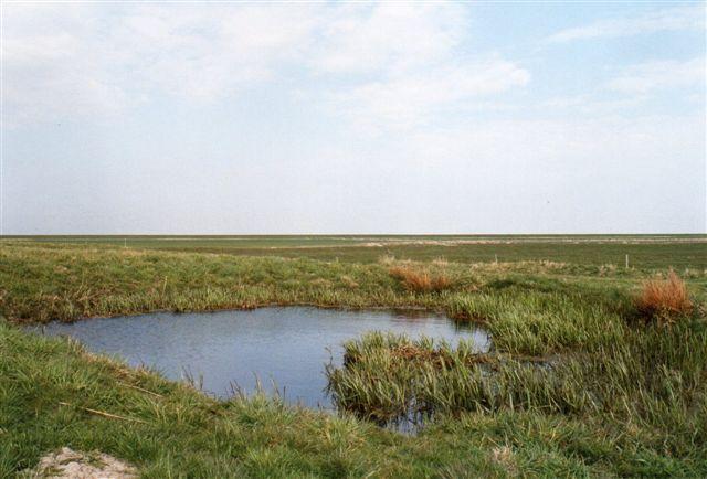 På et af værfterne i Misthusum ses endnu fetingen, ferskvandsreservoiret. Da det lige har regnet, er der vand i. Opbygningen af klæg eller slik er vandstandsende.