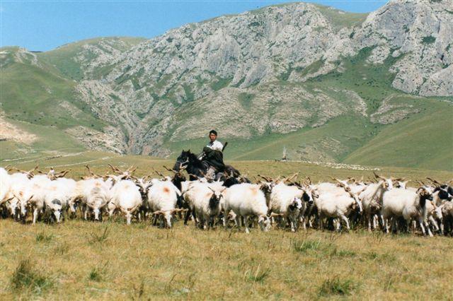 Lige foran os stopper fårene og yakkerne op. De kendte ikke vejen udenom. det havde de gennem tusinde år ikke været vant til, og måske var de bange for os?