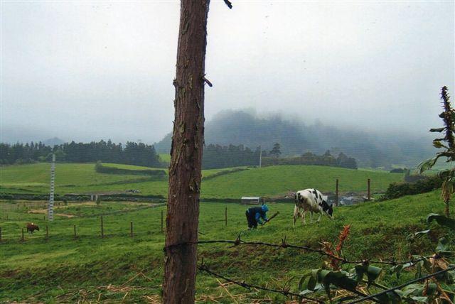Nu er koen flyttet, og ejere er ved at slå tøjerpælen fast. Da han så gik igen, var koen gjorde opmærksom på, at han havde glemt at klø den bag øret!