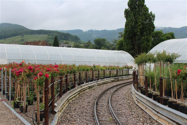 Banen førte gemmen planteskolen med roser til højre og venstre.