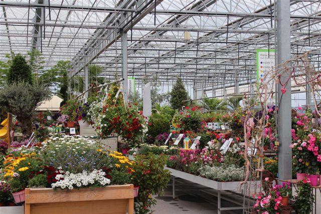 Drivhusene bugnede af blomster - også mere sjældne arter.
