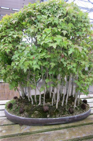 Specielt denne bonsairegnskov tiltalte os.