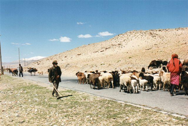 På vejen var der en del trafik. Formentlig andre nomader, der flyttede for sommeren.