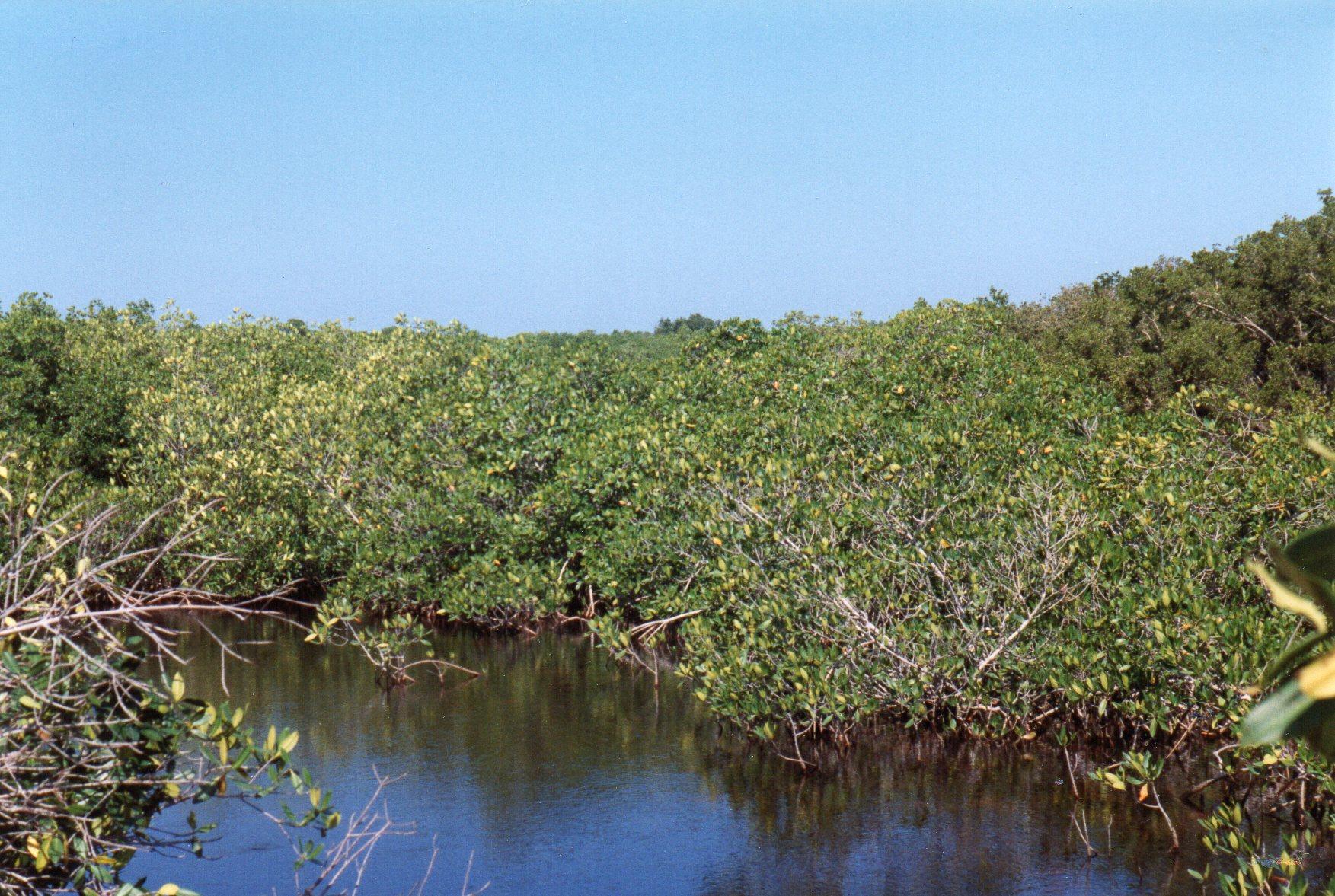 Mangrove i nationalparken yderst på Varaderohalvøen. Hvert år rykkede hotellerne en halv kilometer længere ud i nationalparken, men i 1998 var der endnu et vist udvalg af dyre- og fugleliv.