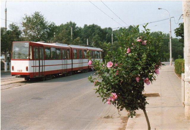 Byen havde også sporvogne, men ikke til centrum. Her ses vogn 142 i Sovejagaden nær pionerbanen.Vejtræerne var blomstrende hibiscus. Linjen førte ud mod turistbydelen Mamaia. Jeg brugte den til at nå pionerbanen.