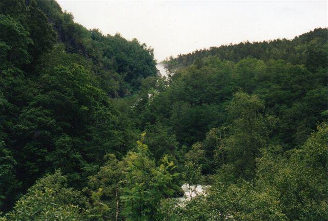 """Det var til tider svært at se naturen for bare træer. Stien ses ikke, men i forgrunden en fos og højere oppe en ny fos. Når vi var forbi en fos, troede vi, at vi var """"oppe,"""" men der var stadig fjelde og nye fosser højere oppe. 1993."""