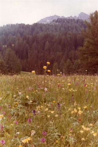På en sæter kan der være blomster. Dette foto er dog ikke fra Seisser Alm, men fra en sæter i 1500 meters højde nær Karerpasset syd for Seisser Alm.. Vi er i 1980.