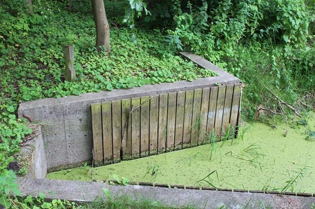 Færgelejets ene ledeværk. Det grønne er vand med andemad.