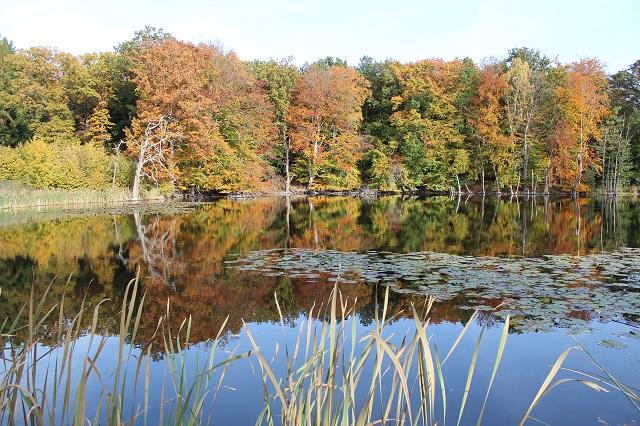 I Aboretet ved Hørsholm er træerne ikke bare plantet, men de er også udvalgt. Søen er heller ikke ægte natur, for også den er stemmet op. Indrømmet. Landskabsarkitekten har være heldig.