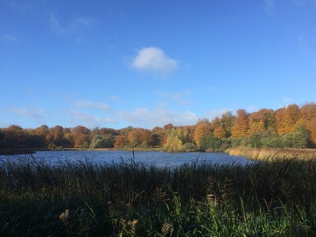 Natur i Dyrehaven. Stadig i begyndende efterårsfarver. Søen pynter, men ægte natur er det ikke. Den er dæmmet op.