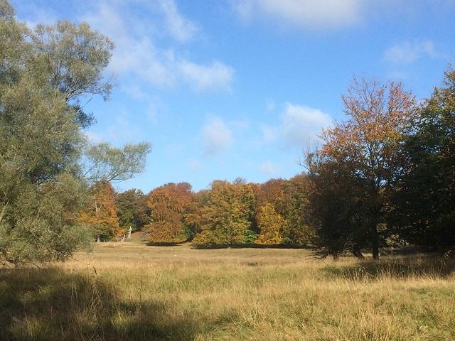 Dyrehaven i begyndende efterårsfarver. o<gså smuk natur. Græsset bliver ikke slået, men både græsset og nye træer gnaves værk af Dyrehavens to tusinde hjorte. Træerne er muligvis i en fjern fortid er muligvis blevet plantet, og skal træerne engang fornyes bliver de nye plantet og indhegnet for at give dem en chance mod hjortene.