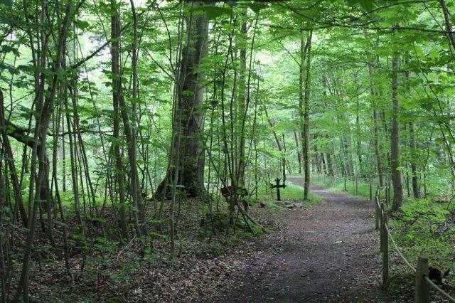 Korset på krigergraven midt på en skovvej i Fuglsangskoven i Fredericia 2016.