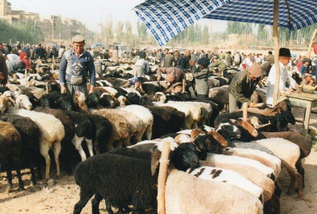 Tja, der er ikke mange dyr at se, men det var dem, jeg ville fotografere. De indfødte her er uighurer, det lokale tyrkiske folk. Jeg havde håbet at få også andre folkeslag med på billedet, men det lykkedes ikke.