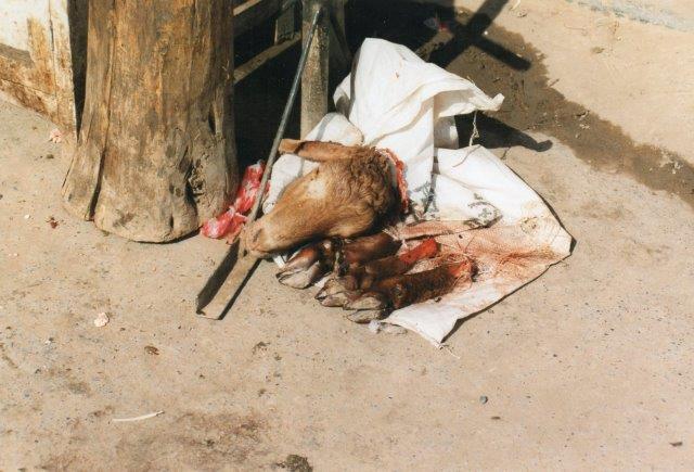 Kød solgtes frisk og nyslagtet. Der slagtede ofte, mens man ventede. Høns solgtes dog levende og slagtedes først hjemme i køkkenet. Af dette dyr er kun hovedet og klovene tilbage og så vidt jeg husker også bræet. De øvrige til slag værende dyr stod bundet lige ved siden og og havde udsigt til resterne af deres familie. Gav vide, om dyr har følelser? Eller skulle jeg hellere spørge om lokale markedsslagtere havde følelser?